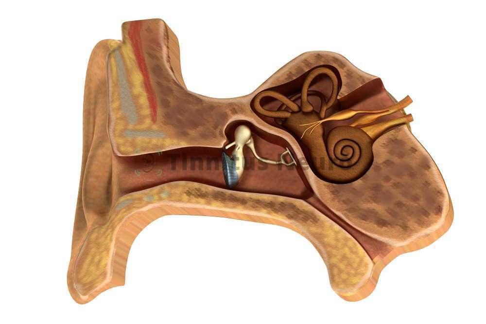 Анатомические изменения в органе слуха приводят к шуму в ушах, заложенности