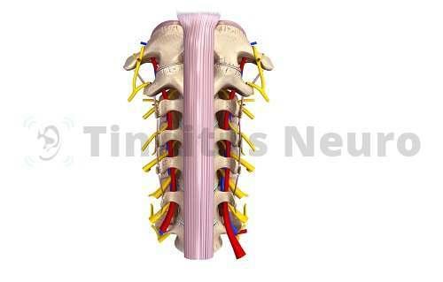 Дистрофические изменения шейного отдела влекут за собой сосудистую и нервную патологию