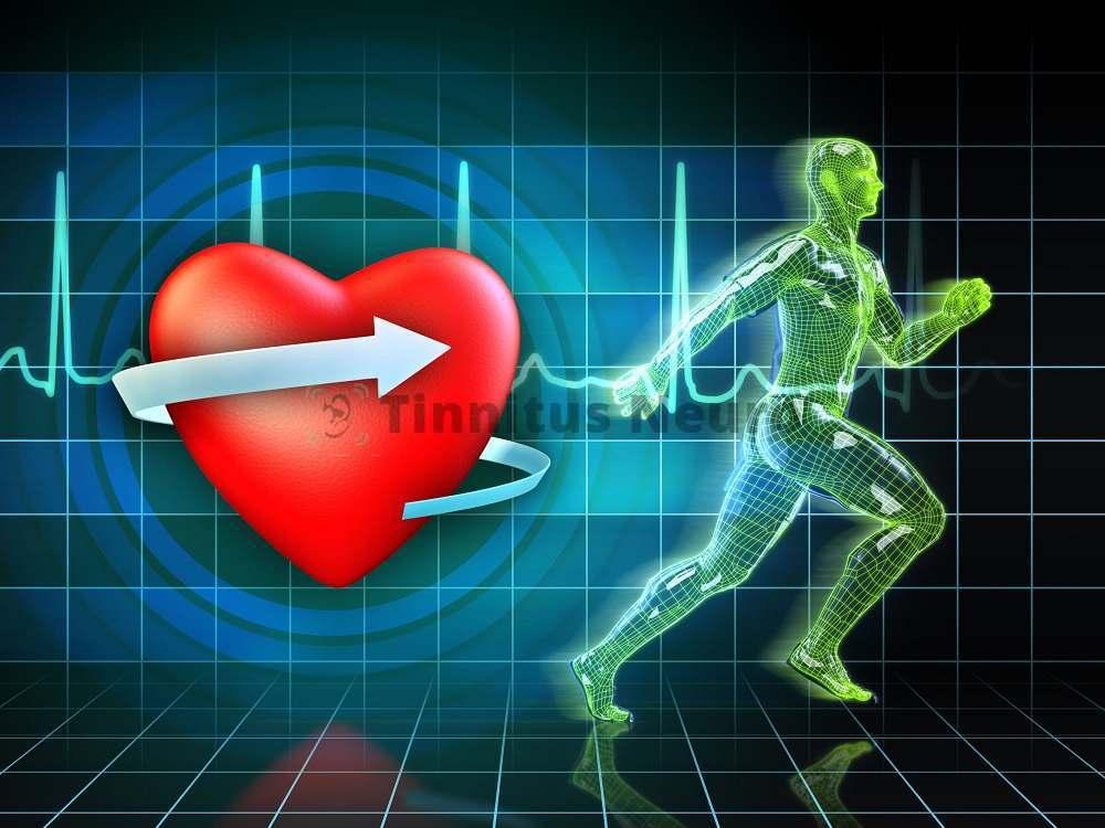 Исследование функции сердца под нагрузкой