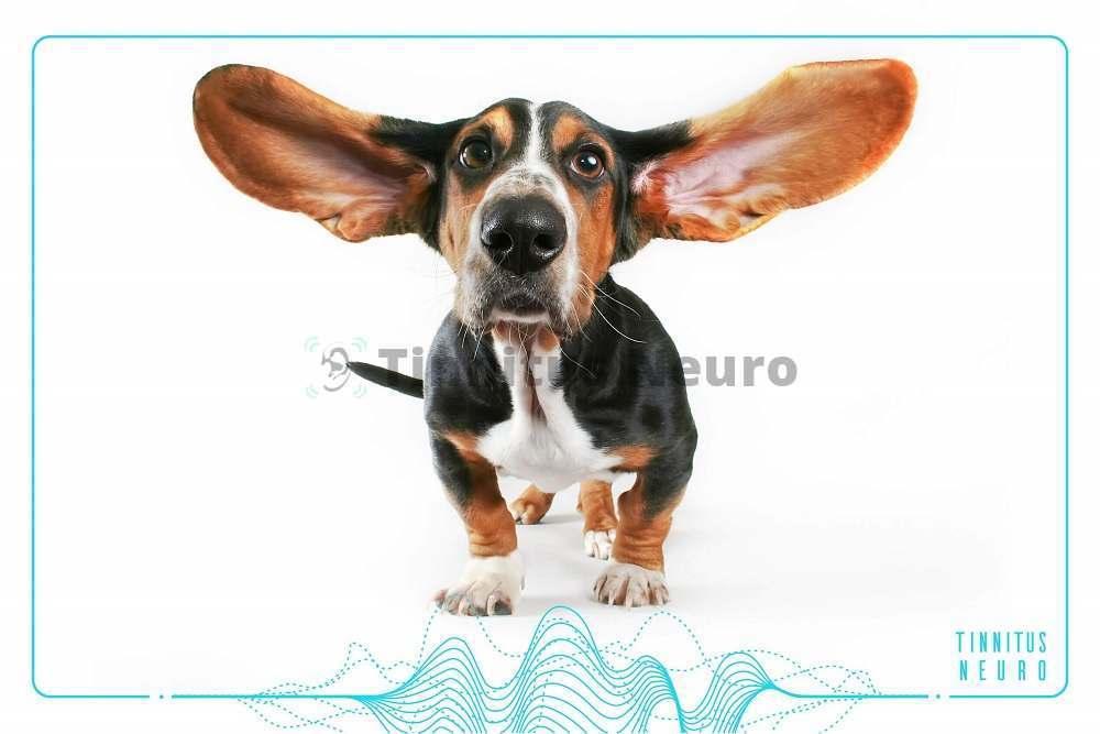 Профилактика шума в ушах поможет снизить заболеваемость