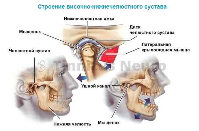 Связь сустава с другими структурами головы