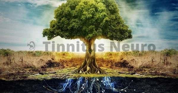 У деревьев есть чему поучиться