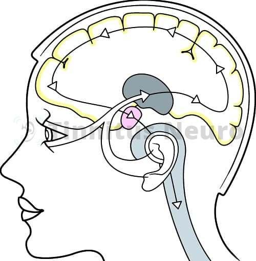 Принцип зрительной стимуляции в лечении тиннитуса